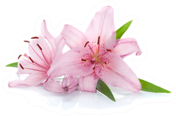 Two Pink Lily Flowers Sticker