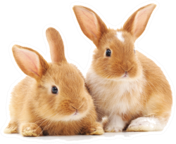Two Small Rabbits Isolated Sticker