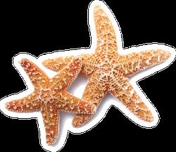 Two Starfish On White Background Sticker