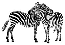 Two Zebras Standing Isolated On White Sticker