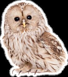 Ural Owl Photo Sticker