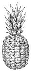 Vector Hand Drawn Pineapple Sticker