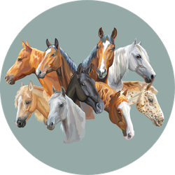 Vector Portraits Of Horses Breeds On Grey Sticker