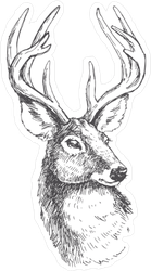 Vector Vintage Deer Head In Engraving Style Sticker