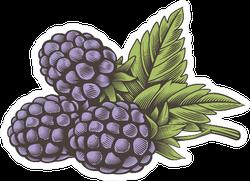 Vintage Color Blackberry Sticker