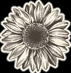 Vintage Sunflower Illustration Sticker
