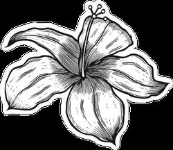 Vintage Woodcut Hibiscus Sticker