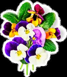 Viola Pansy Flower Creative Composition Sticker