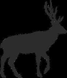 Walking Buck With Antlers Sticker