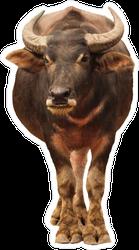 Walking Buffalo Sticker