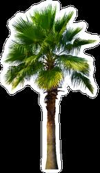 Washington Palm Tree Sticker