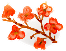 Watercolor Beautiful Sakura Branch Sticker