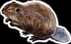 Watercolor Beaver In White Background Sticker