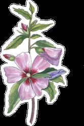 Watercolor Botanical Illustration Of Hibiscus Sticker