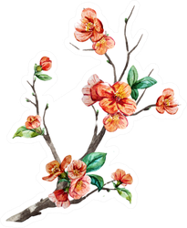 Watercolor, Branch Chinese Cherry Blossom Sticker