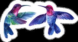 Watercolor Bright Little Hummingbirds Sticker