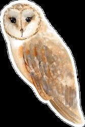 Watercolor Brown Owl Sticker
