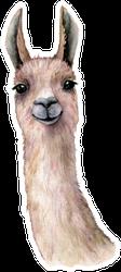 Watercolor Card With Llama Head Sticker