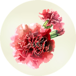 Watercolor Carnations On Light Background Sticker