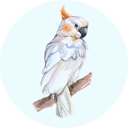 Watercolor Cockatoo Bird Animal On A White Background Sticker