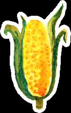 Watercolor Corn On The Cob Autumn Thanksgiving Sticker