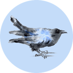 Watercolor Crow Raven Bird Painting Illustration Sticker