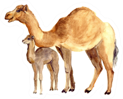 Watercolor Cute Camel With Baby Sticker