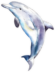 Watercolor Dolphin,  Hand-drawn Illustration Sticker