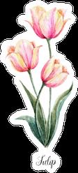 Watercolor Floral Botanical Illustration Tulip Sticker
