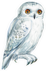 Watercolor, Hand Drawing Owl Sticker