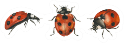 Watercolor Hand Drawn Ladybugs Sticker