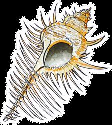 Watercolor Illustration Seashells Summershell Sticker