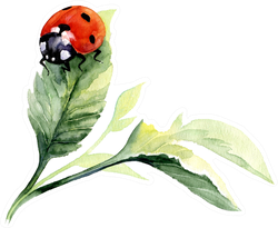 Watercolor Ladybug Drawing Sticker