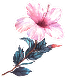 Watercolor Light Pink Hibiscus Sticker