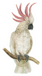 Watercolor Painting Cockatoo Bird Sticker
