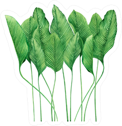 Watercolor Palm Fronds Sticker