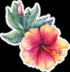 Watercolor Peach Pink Hibiscus Flower Sticker