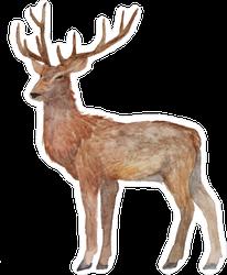 Watercolor Realistic Deer Sticker
