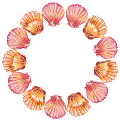 Watercolor Round Frame Of Sea Shells Sticker