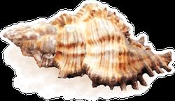 Watercolor Sea Shell Realistic Sticker