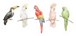 Watercolor Set With Colorful Parrots Cockatoos Sticker