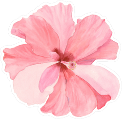 Watercolor Soft Red Hibiscus Sticker