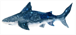 Watercolor Stars Shark Sticker