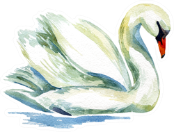 Watercolor Swan Hand Painted Illustration Sticker