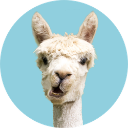White Alpaca On Blue Background Sticker
