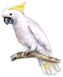 White Cockatoo Sitting On A Branch Watercolor Illustration Sticker