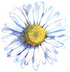 White Daisy Flower Sticker