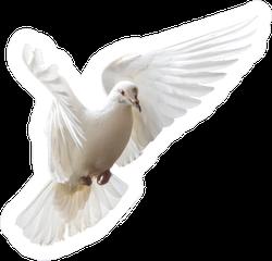 White Dove Beautifully Flies Isolated On White Sticker
