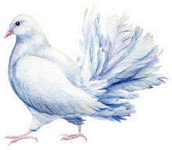 White Dove Watercolor Illustration Sticker