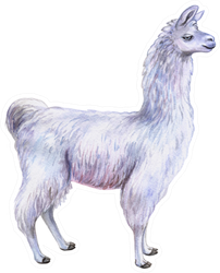 White Llama Or Alpaca Hand-drawn Watercolor Sticker
